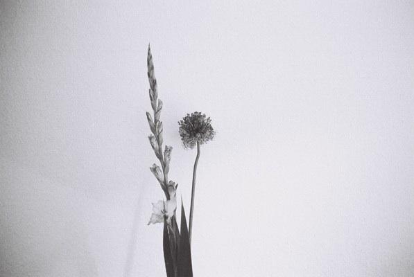http://ellyclarke.com/files/gimgs/18_flowersfromk.jpg